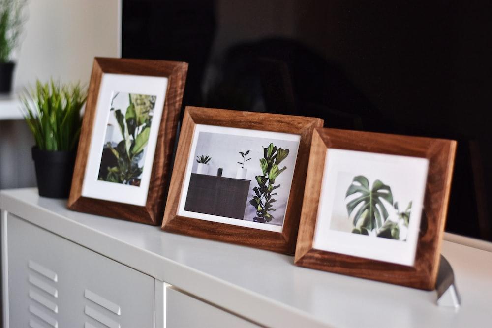 three plant photos on white metal cabinet