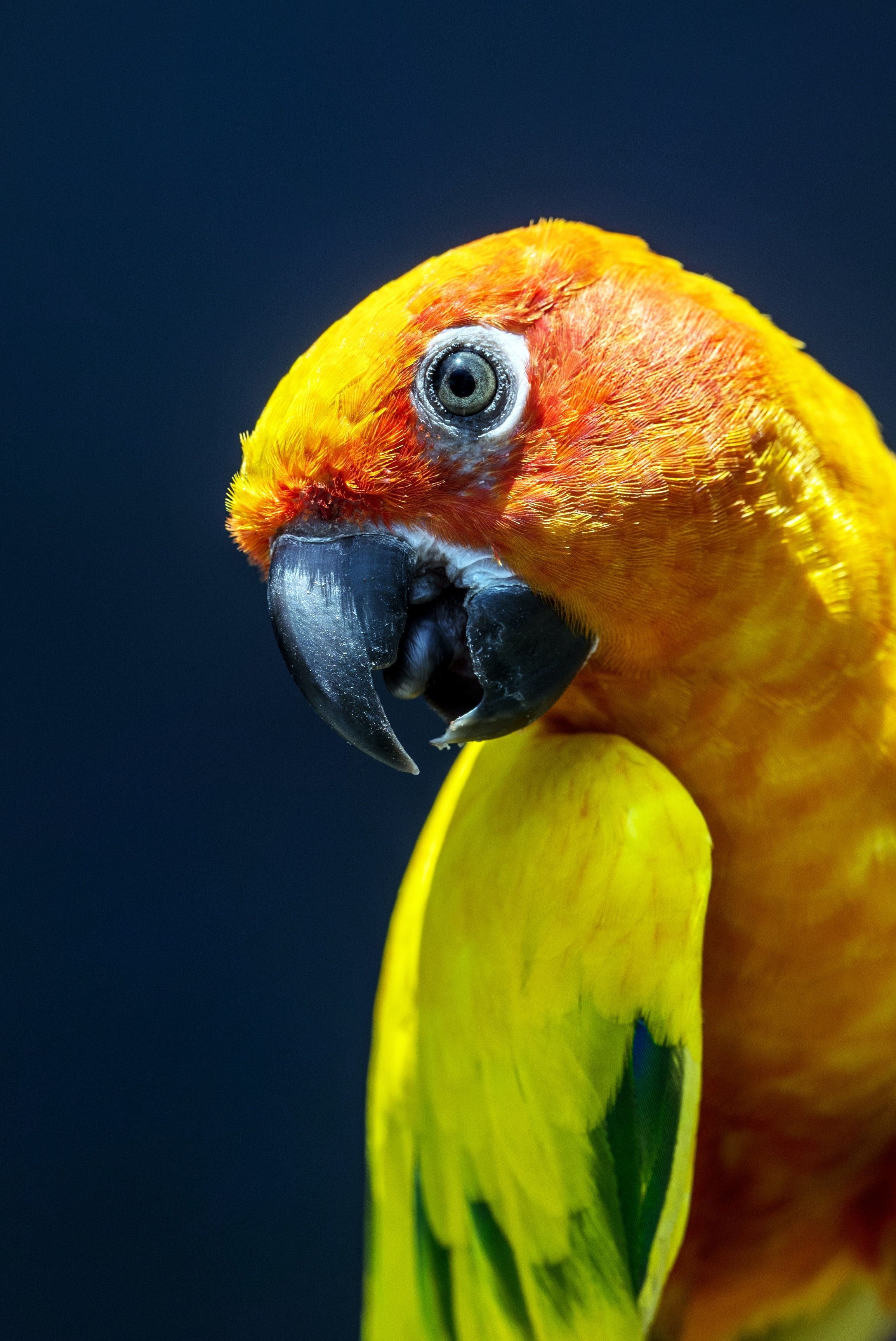 yellow and green parrot