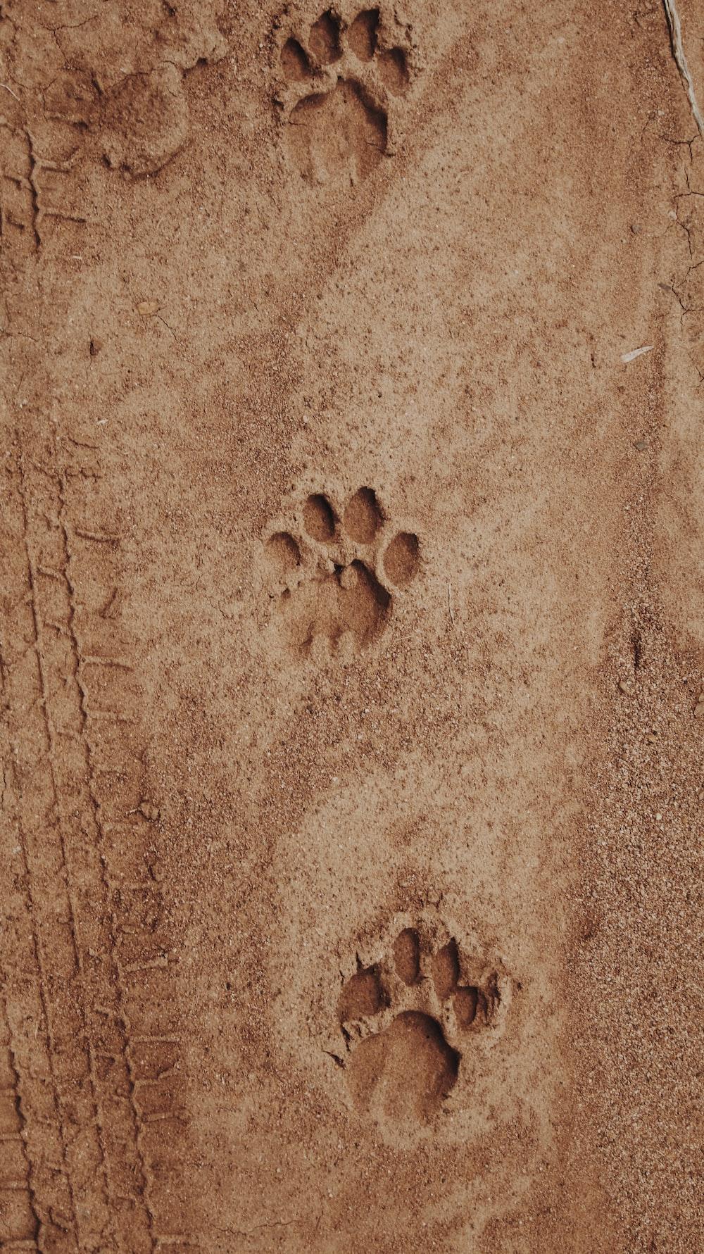 paw print on sand