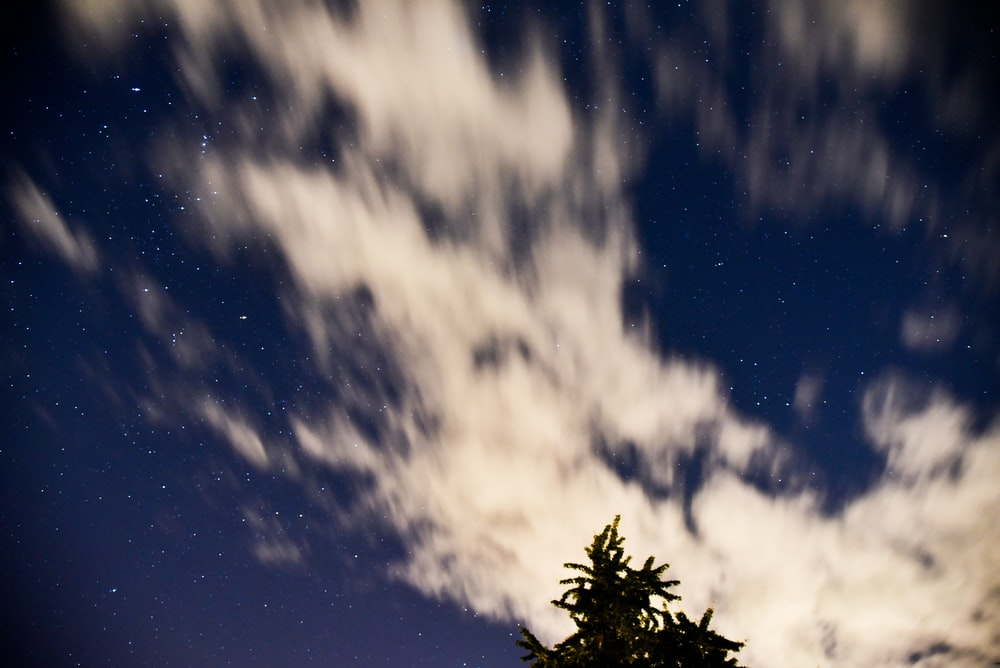 green tree over white clouds surrounded with stars