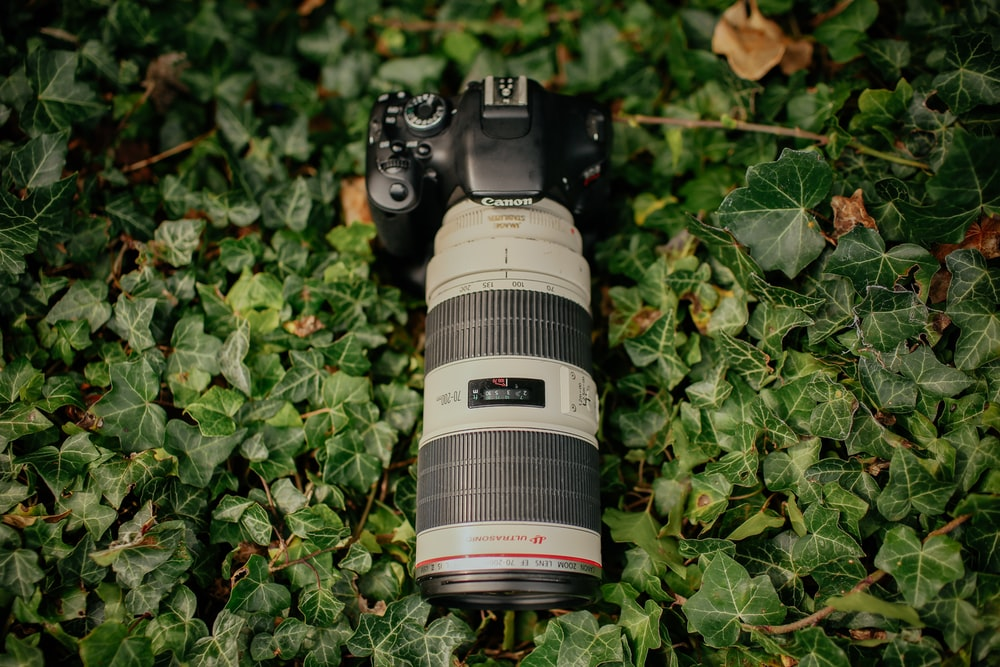 gray and black Canon DSLR camera with zoom lens on green plant