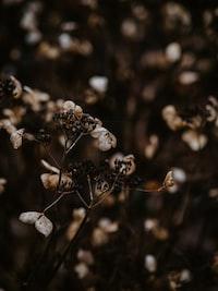 brown flowers in bloom