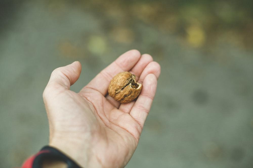 man holding brown nut