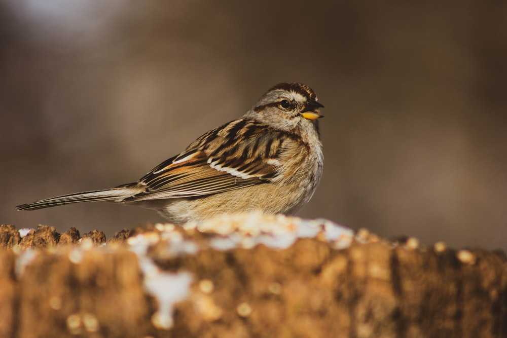 gray and brown bird in selective focus photography