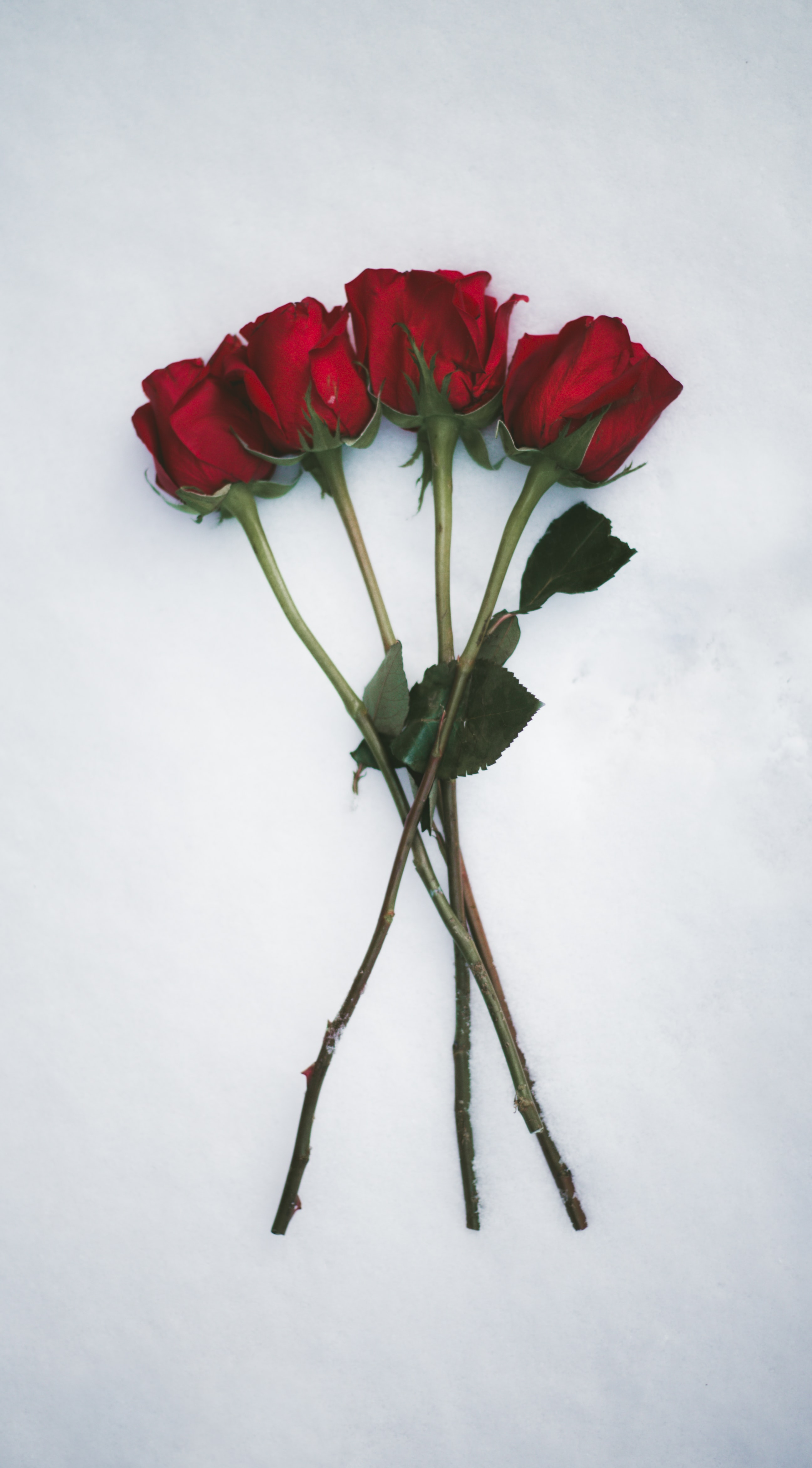 red rose flowers on white surface