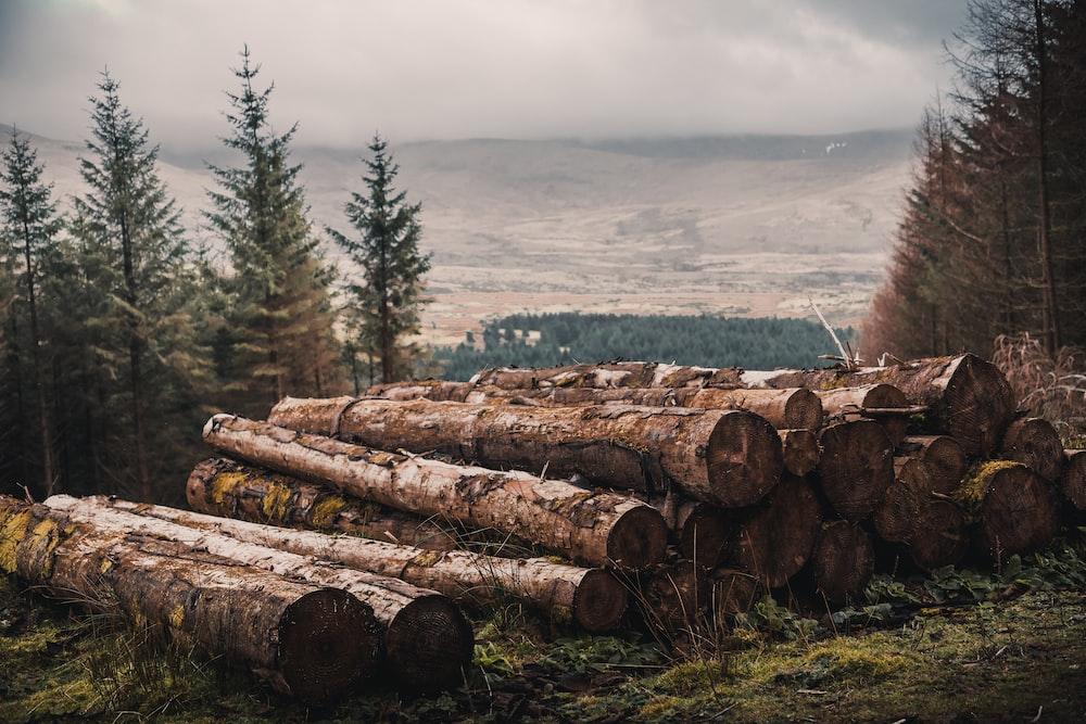 cut wood log lot