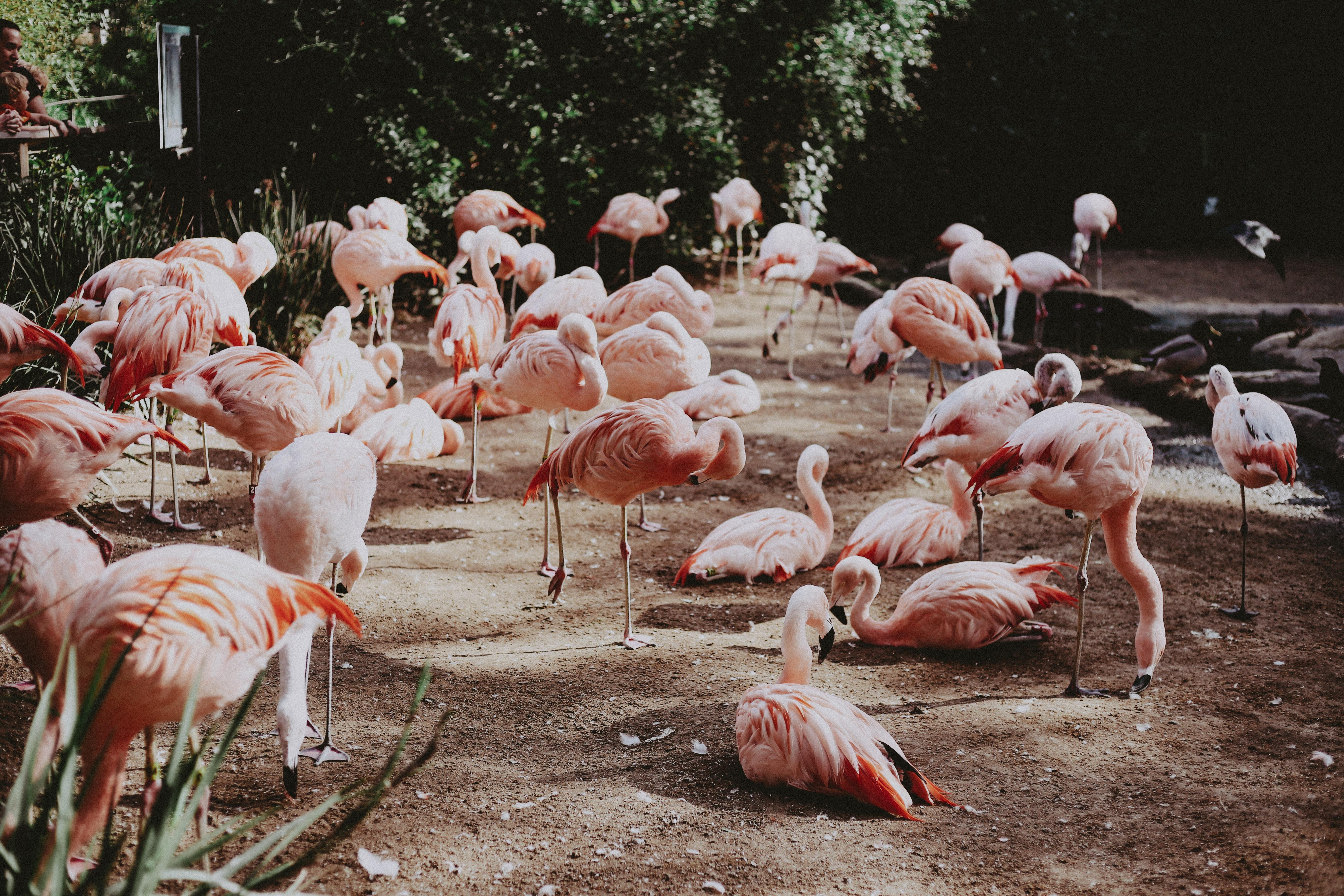pink birds on park