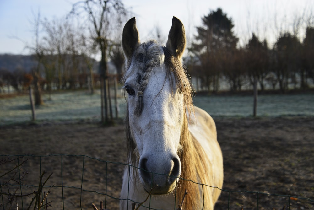 closeup photo of white and brown horse and trees during daytime