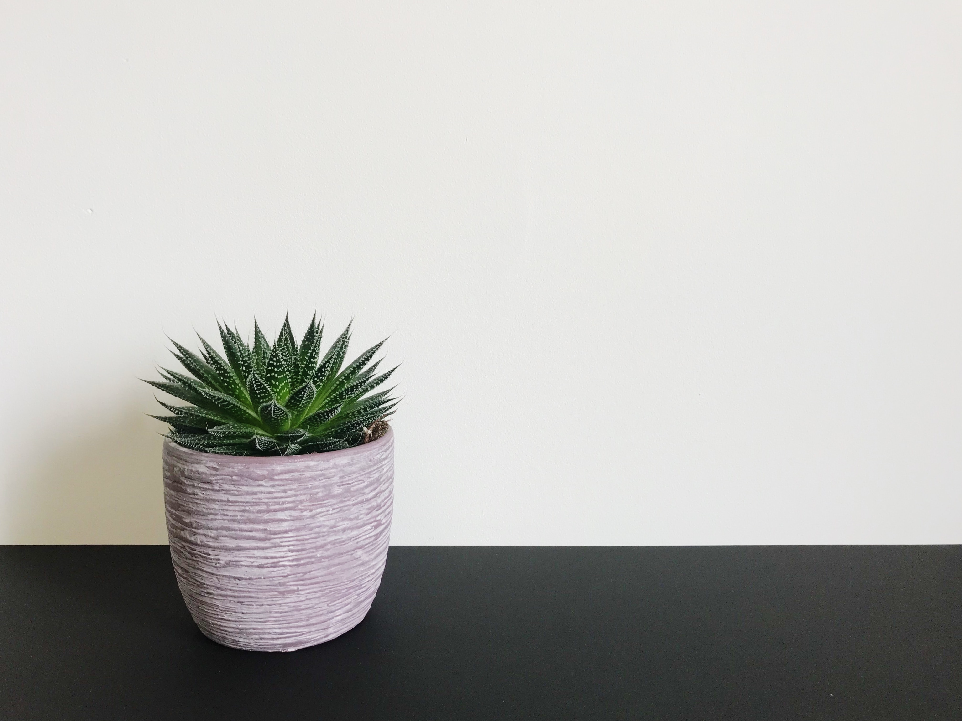 brown pot with green aloe vera by wall