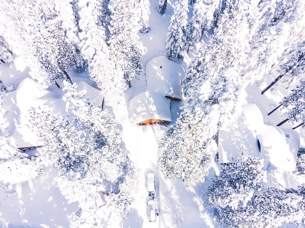 aerial view of snow covered trees