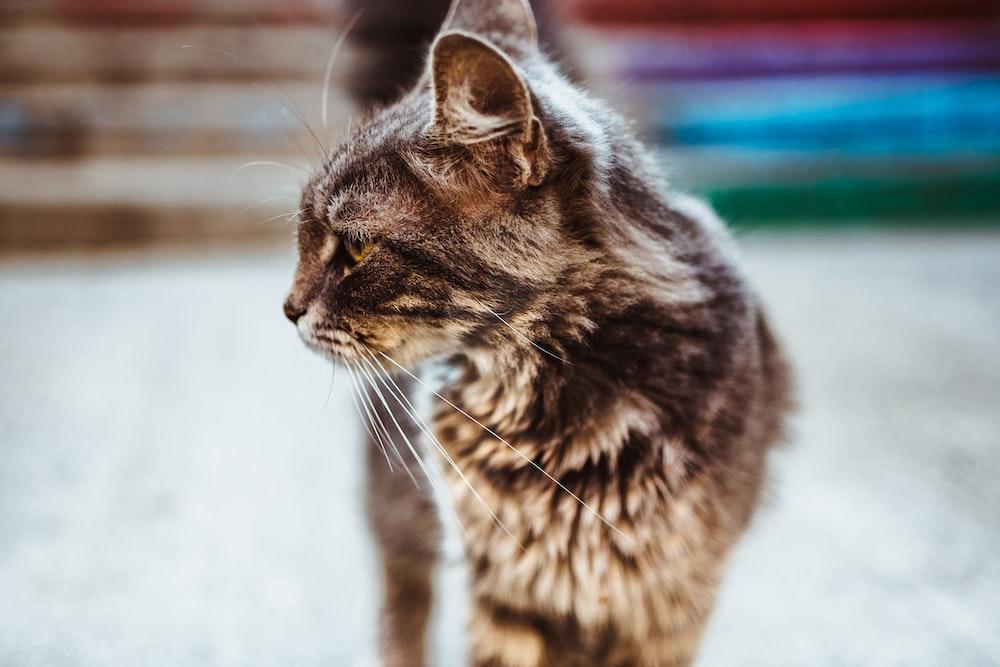 selective focus photography of short-fur black cat