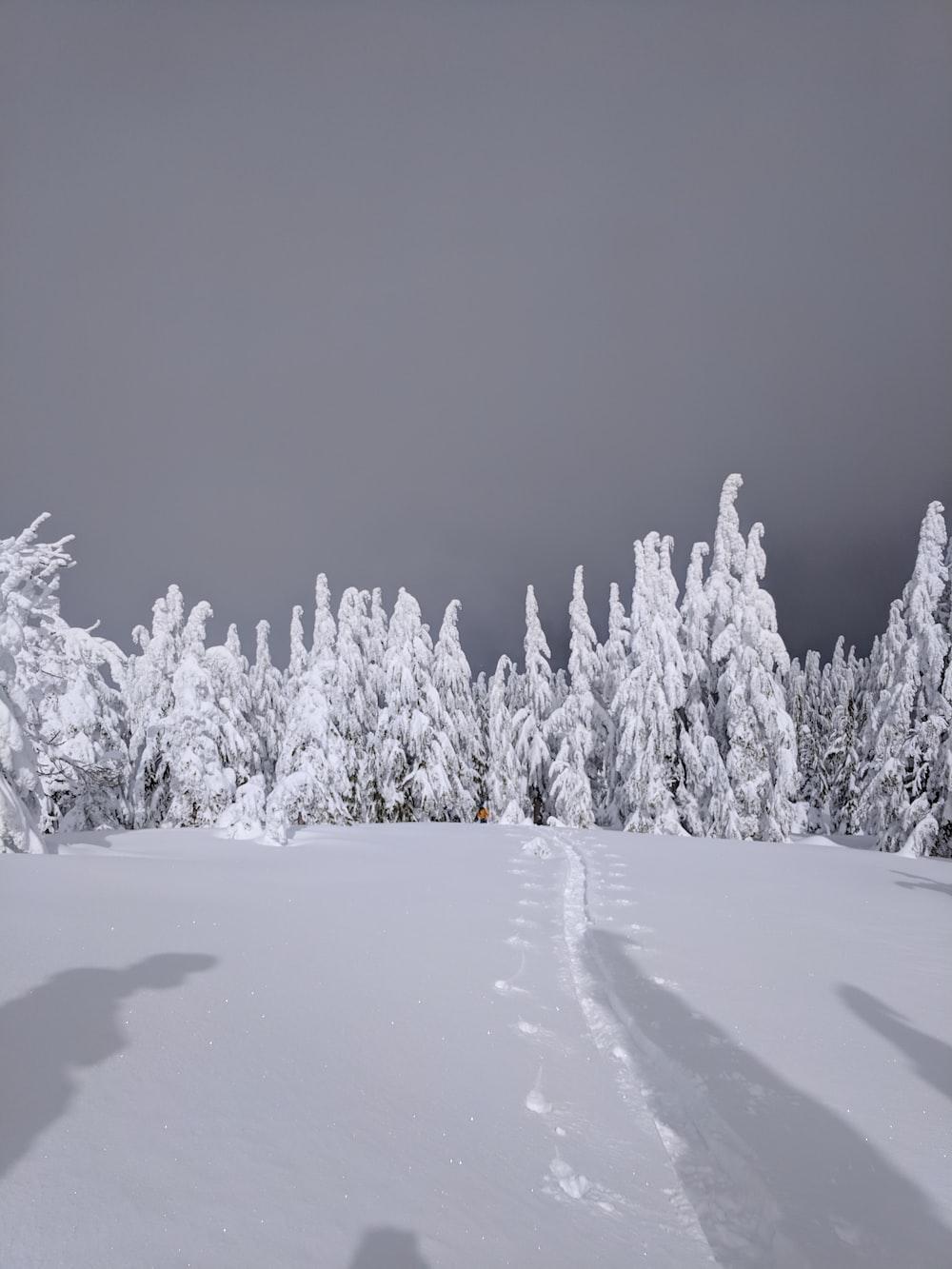white fields across white trees