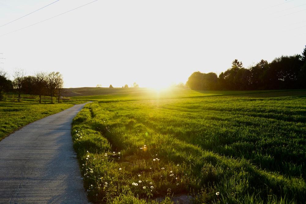 gray road beside green grass fields