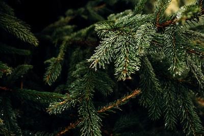 green tree leaves christmas tree teams background
