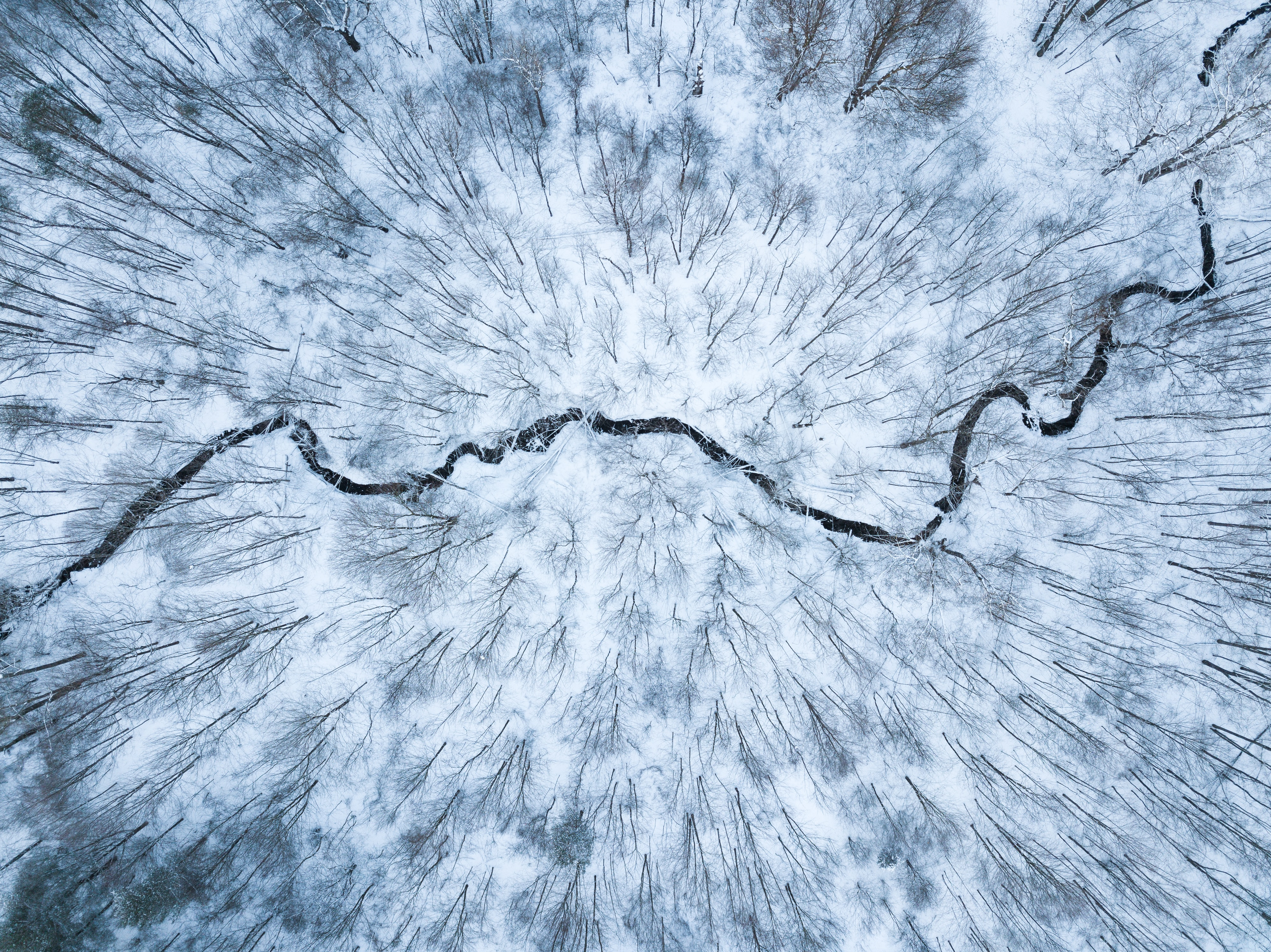 aerial view photography of trees
