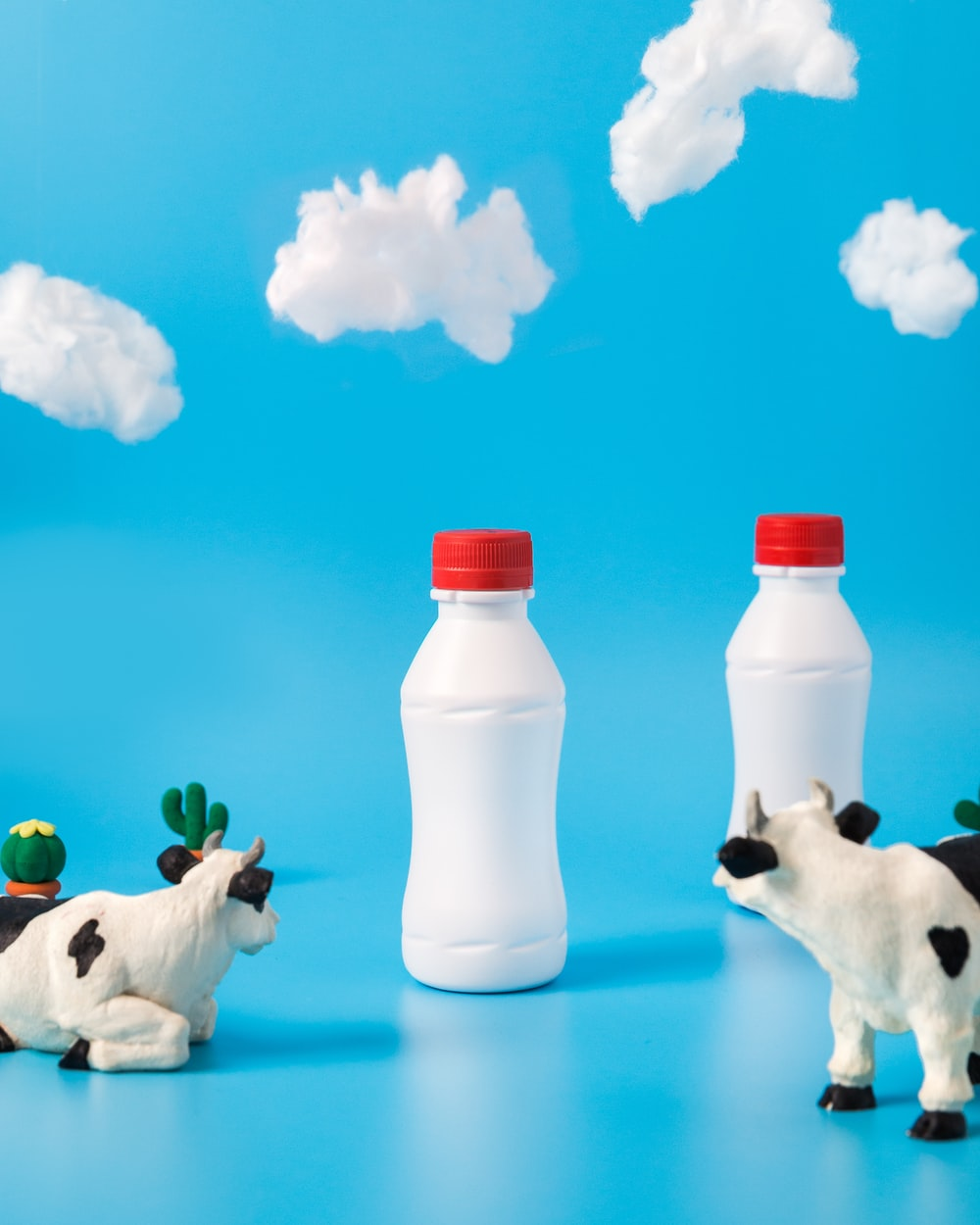 two black-and-white dairy cows looking on white bottles