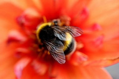 selective focus photography of bee