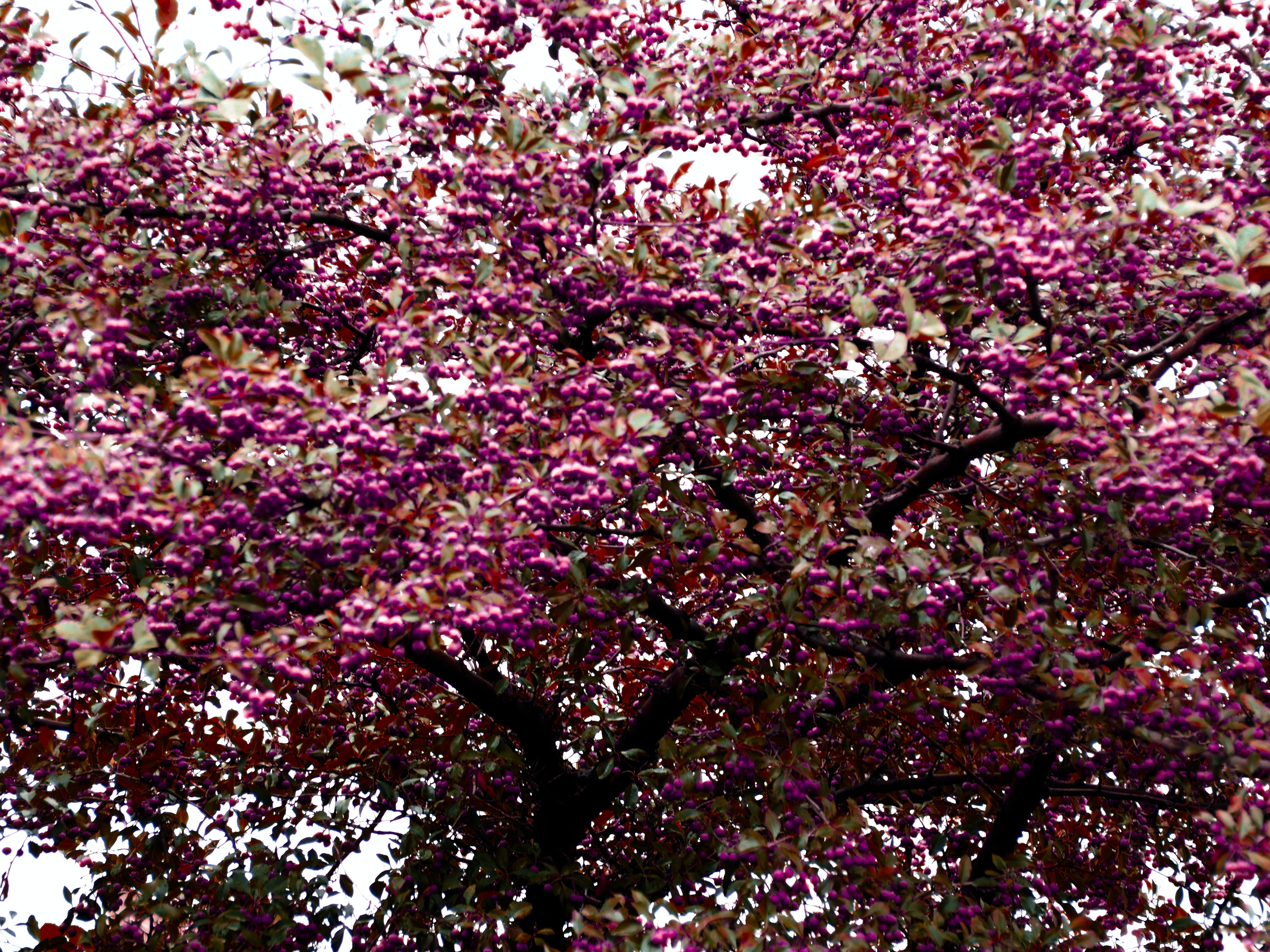 photo of pink cherry blossom tree