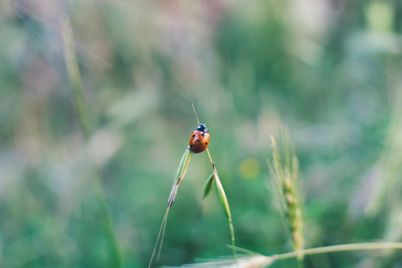 ladybug on lante