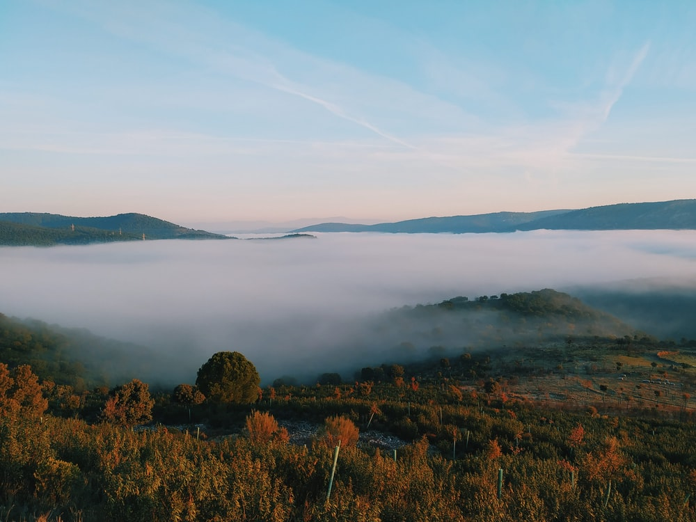 bird's-eye view photography of forest with fogs