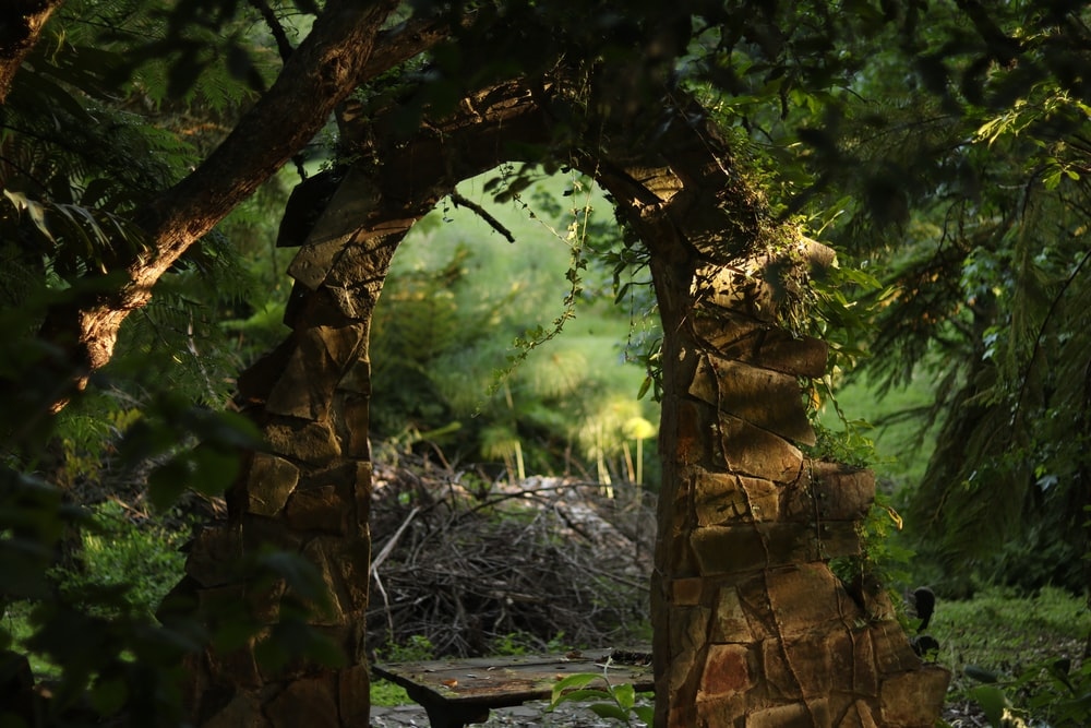arch-shape gate in forest