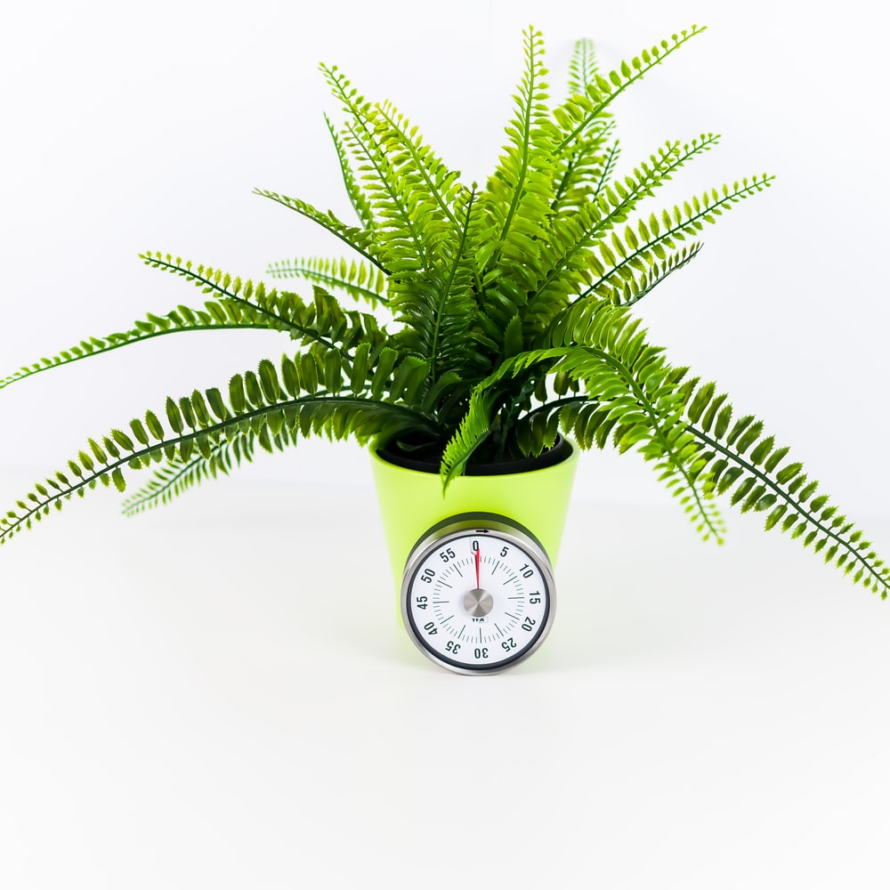 green fern plant inside yellow pot with clock