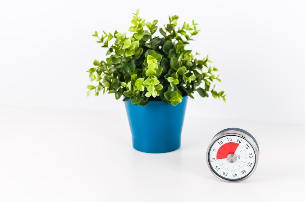 green plants in blue pot