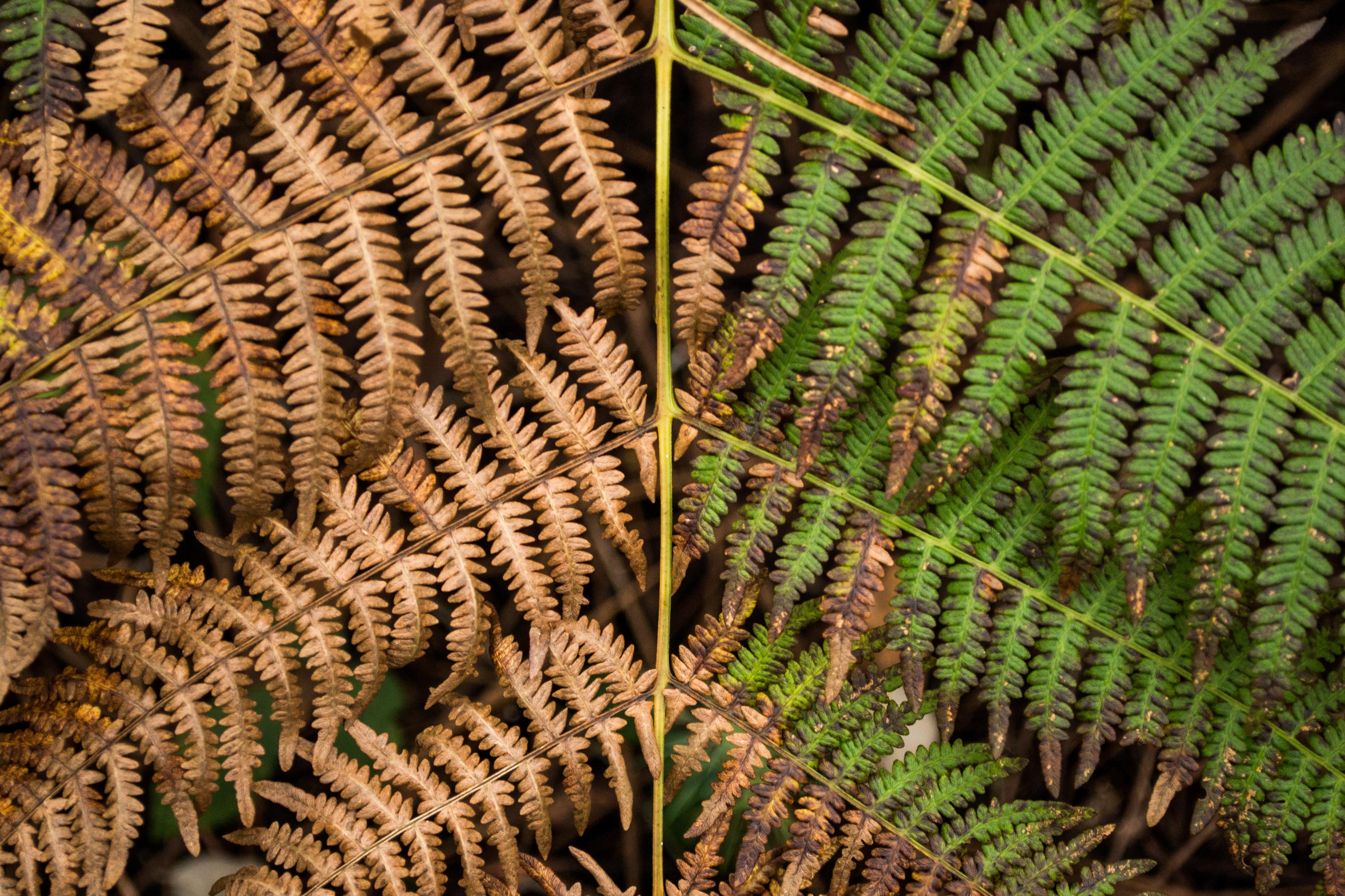 dried and fresh fern leaves