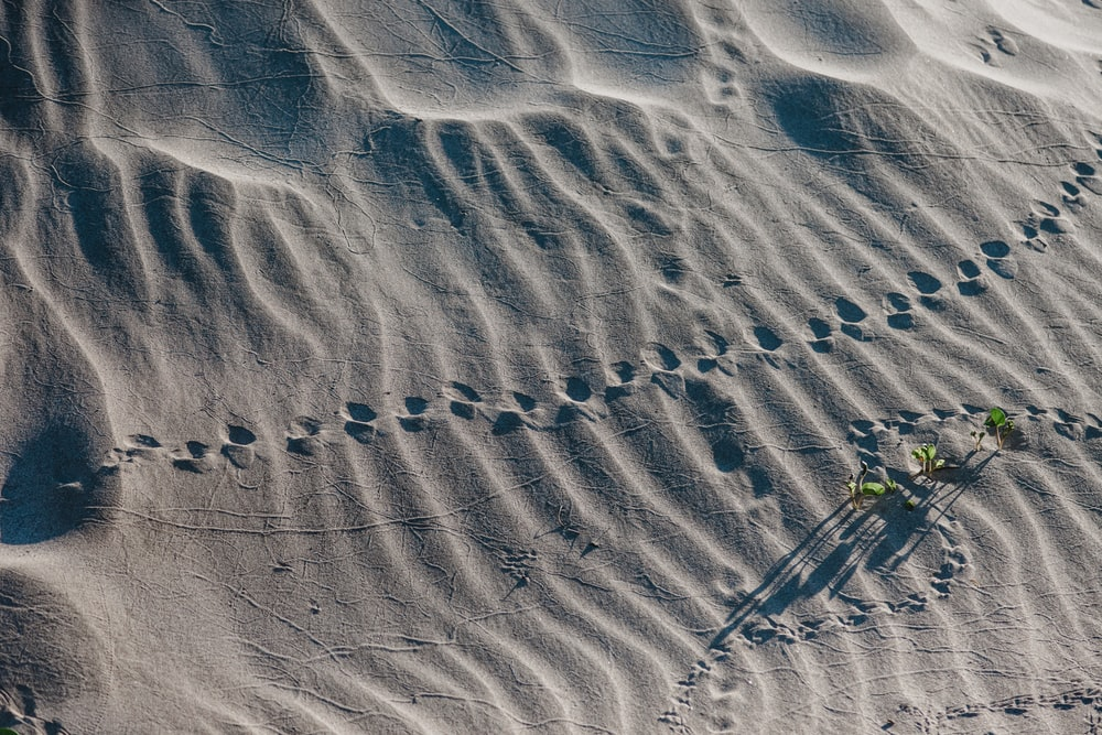 trail on sand during daytime