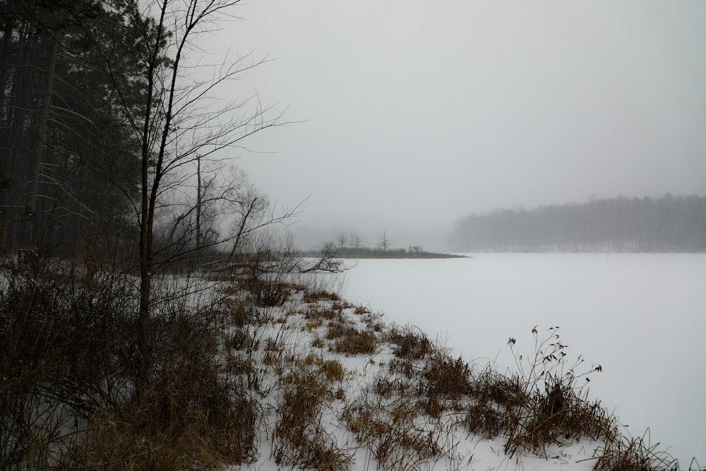snow field beside trees