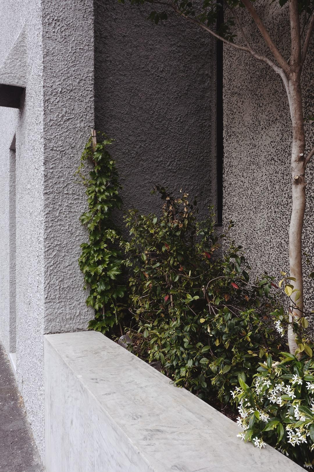 Plants & Concrete