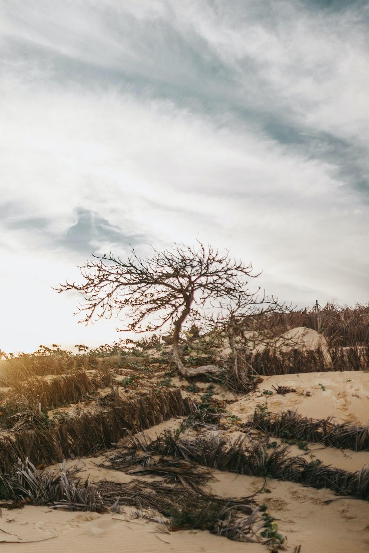 leafless tree on sand