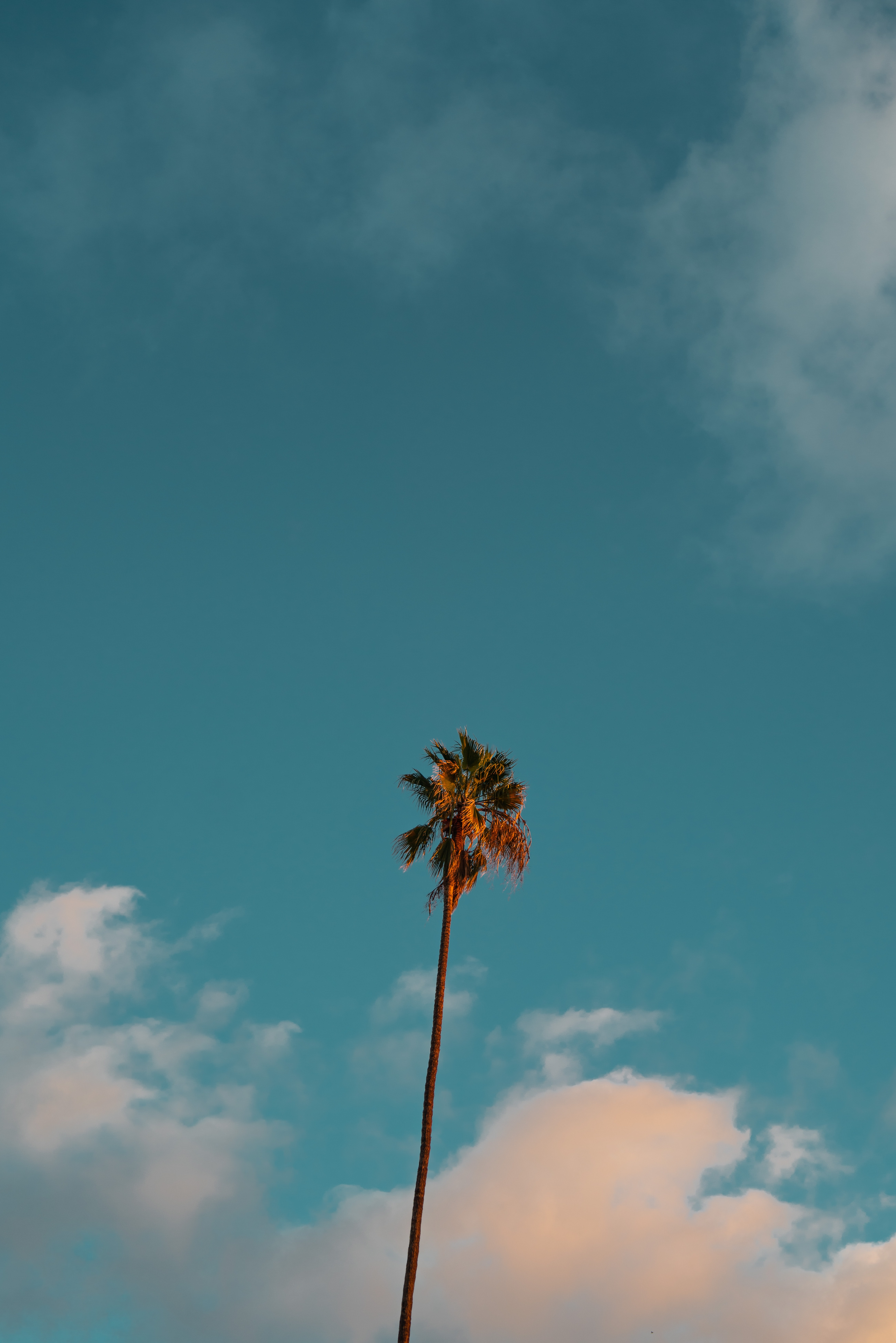 low angle photography of palm tree under blue sky