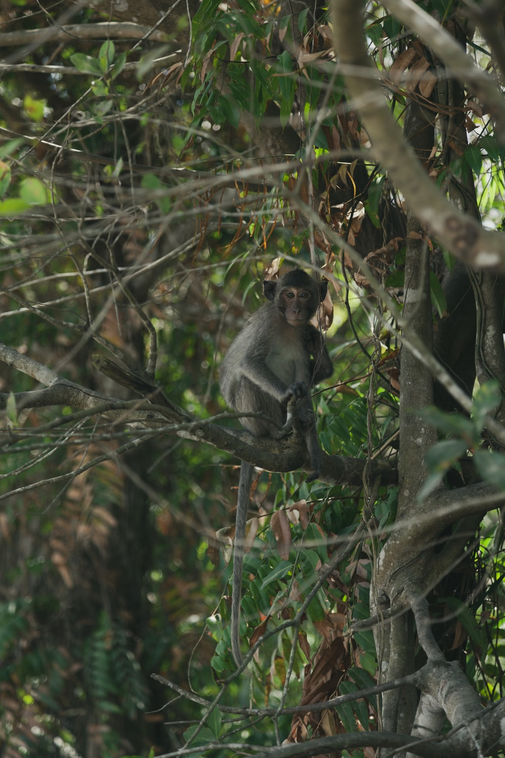 gray monkey on brown wooden tree