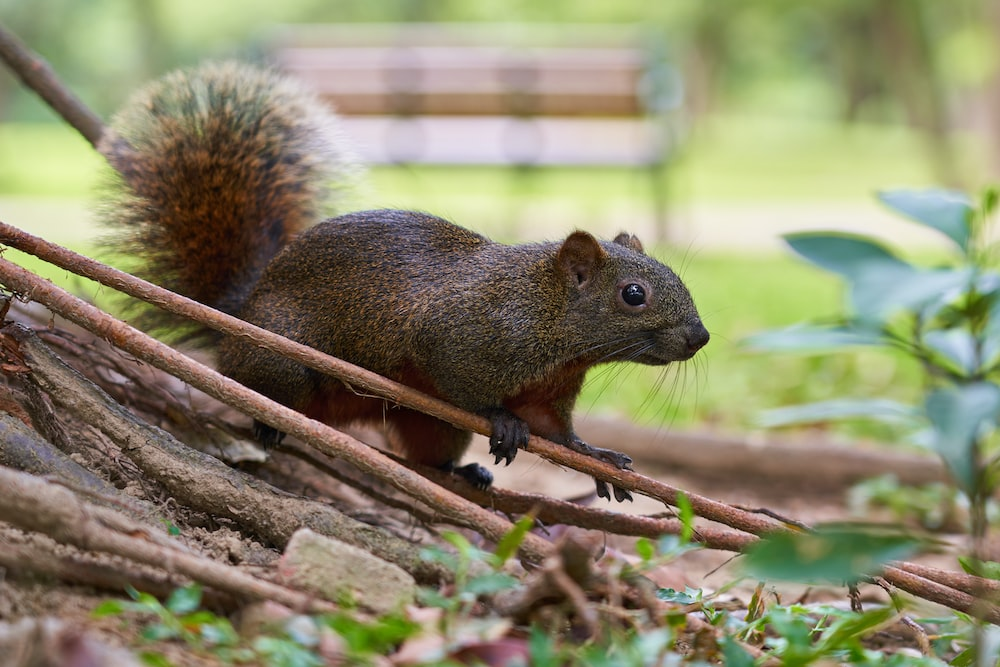gray rodent standing beside tree