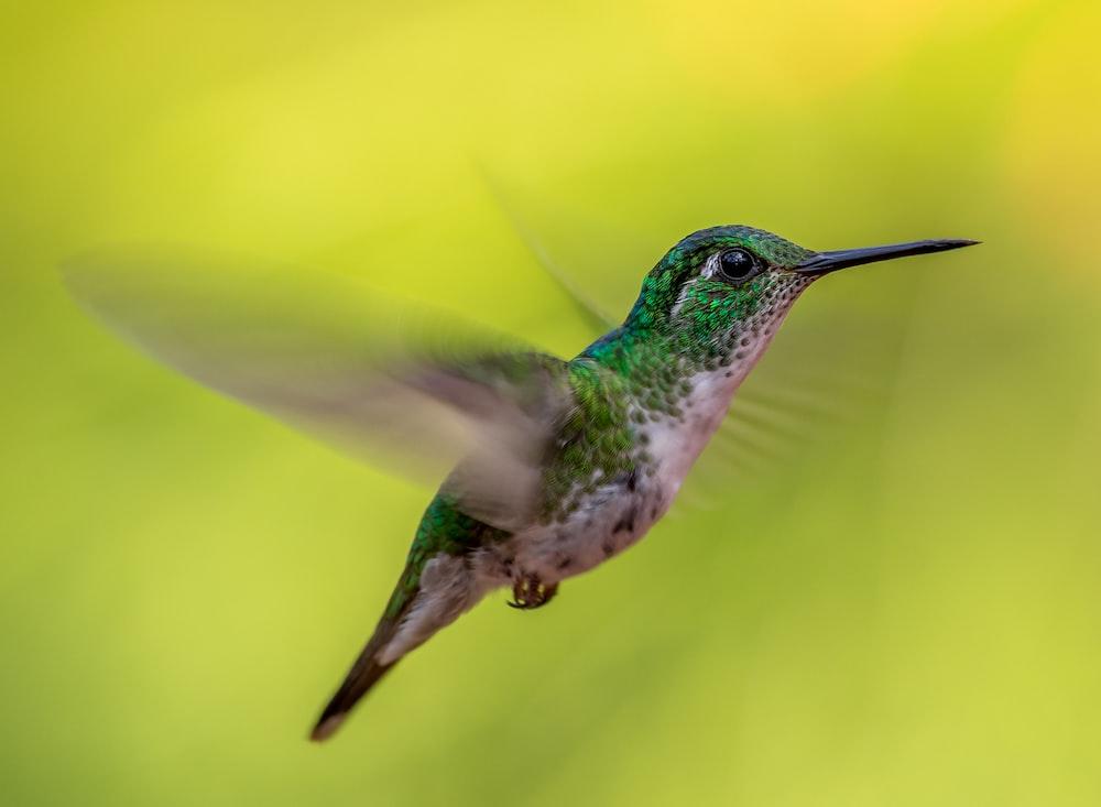 green and gray humming bird screenshot