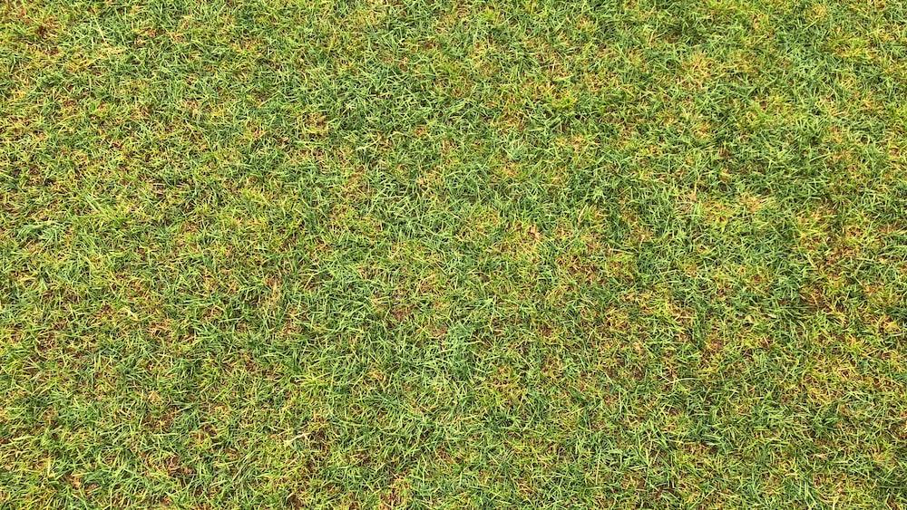 green grass on daylight