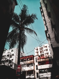 palm tree in the middle of city buildings