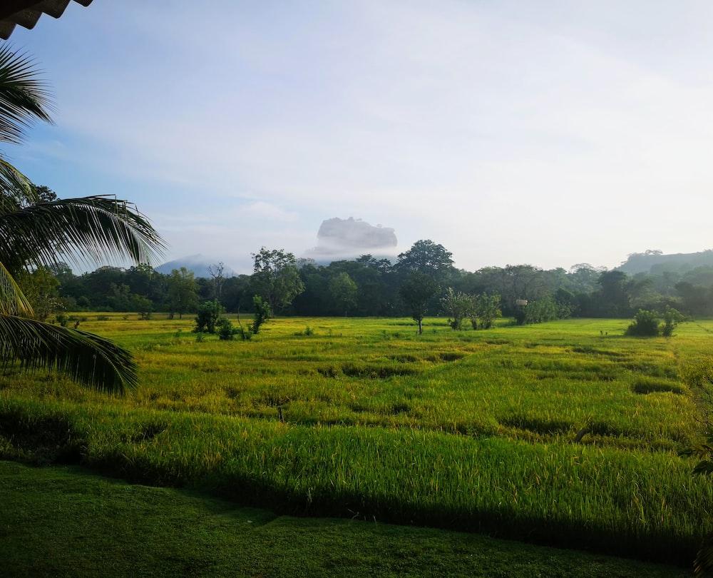 landscape photography of farm