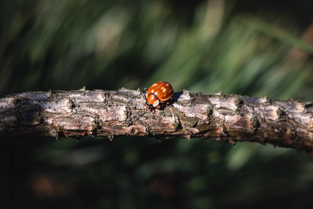 brown bu on tree branch