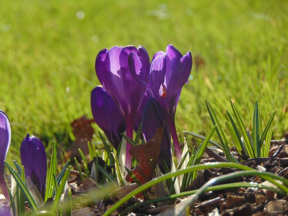 purple petaled flowers view