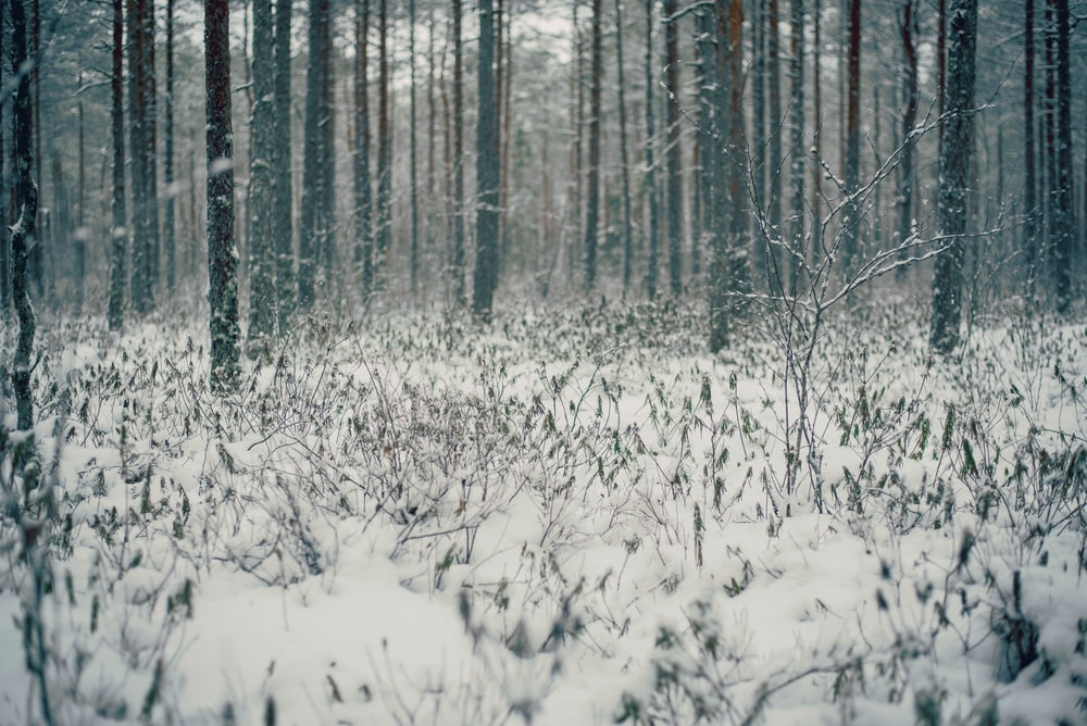 snow covered field in middle of woods
