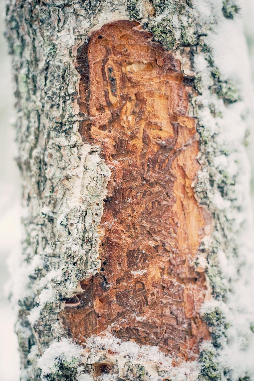 brown and gray tree bark