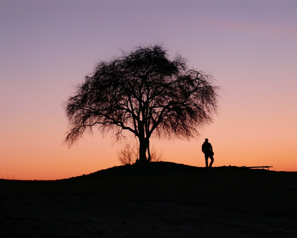 silhouette of tree and person