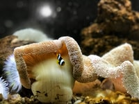 brown and white fish and yellow corals