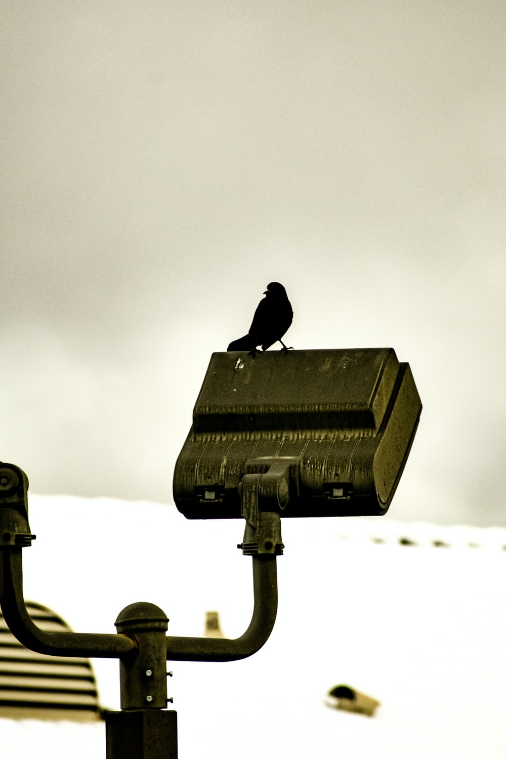 black bird on top of spotlight