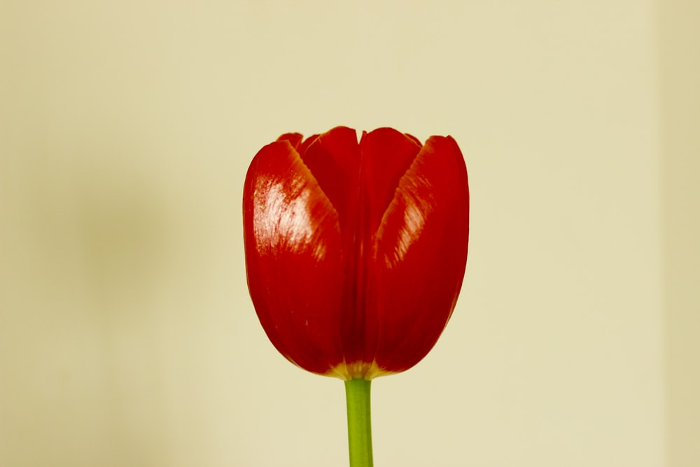 shallow focus photo of red flower