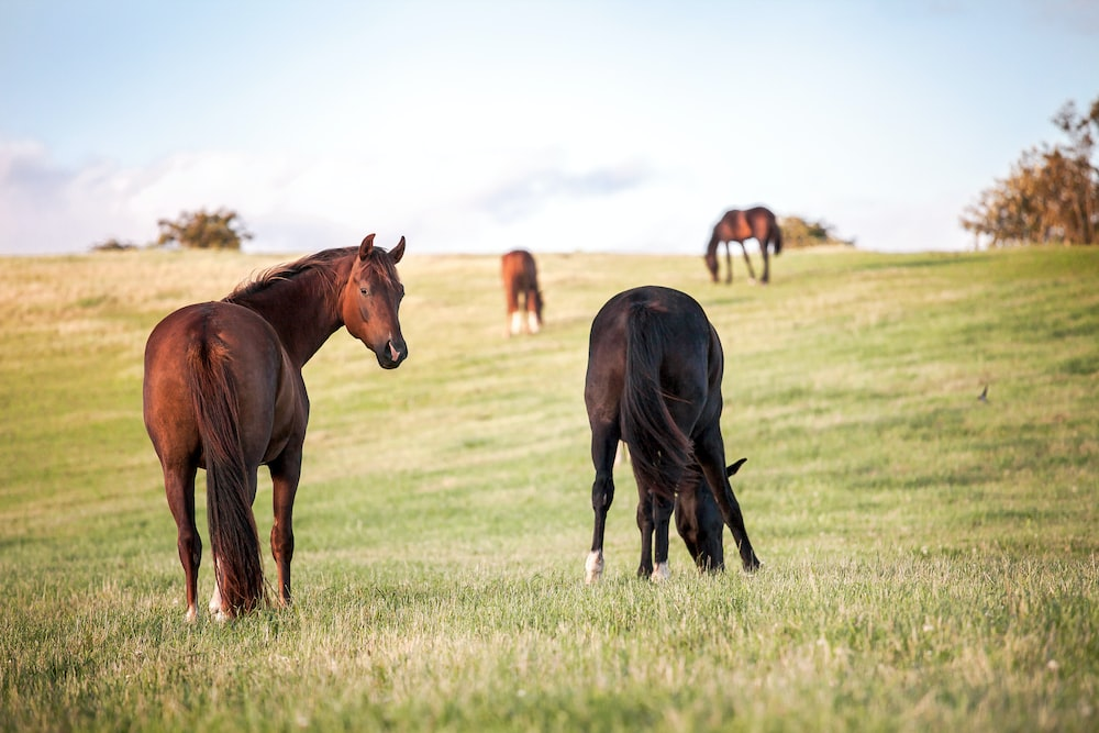 four horses on grass field