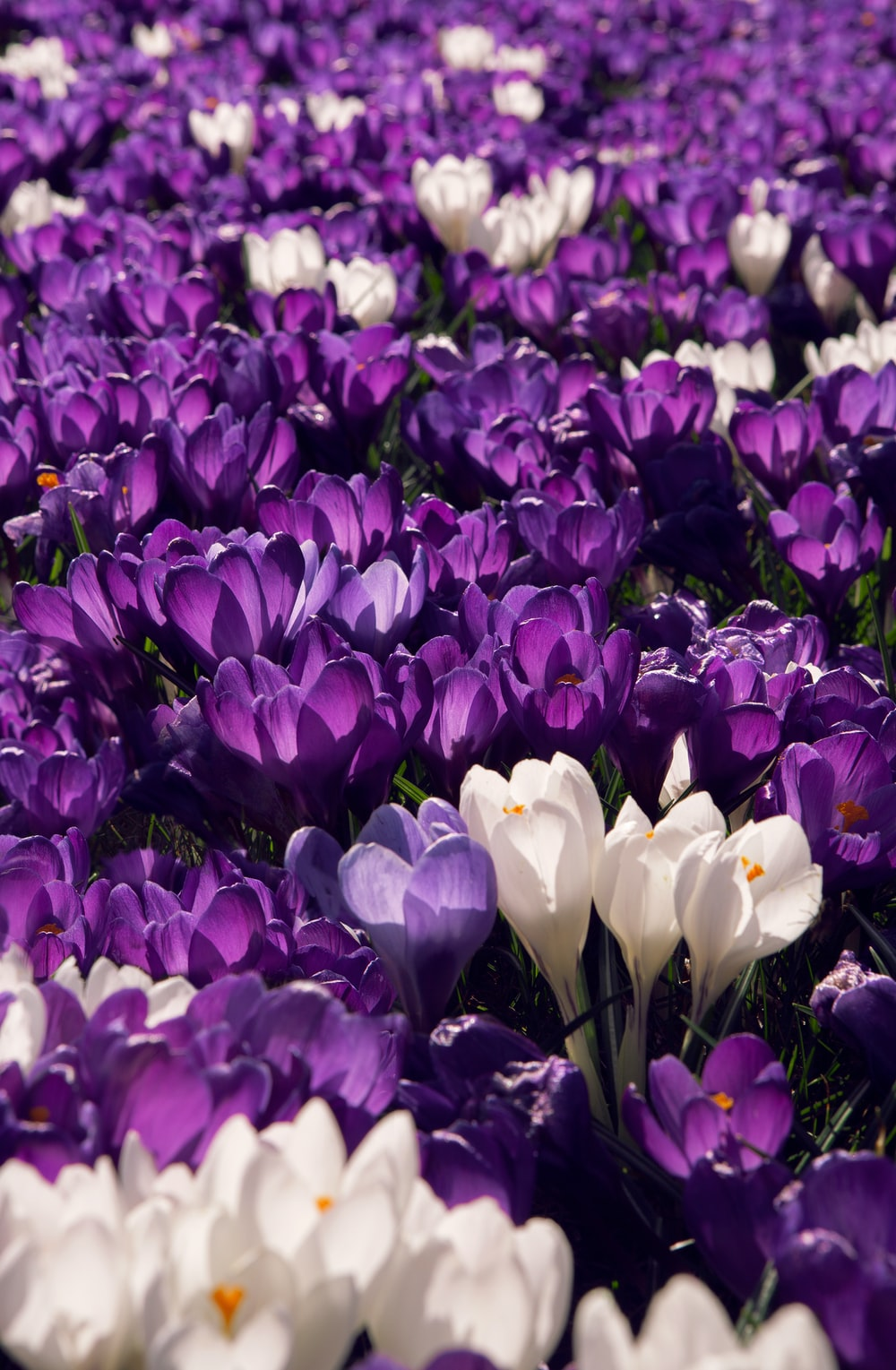purple and white flower field\