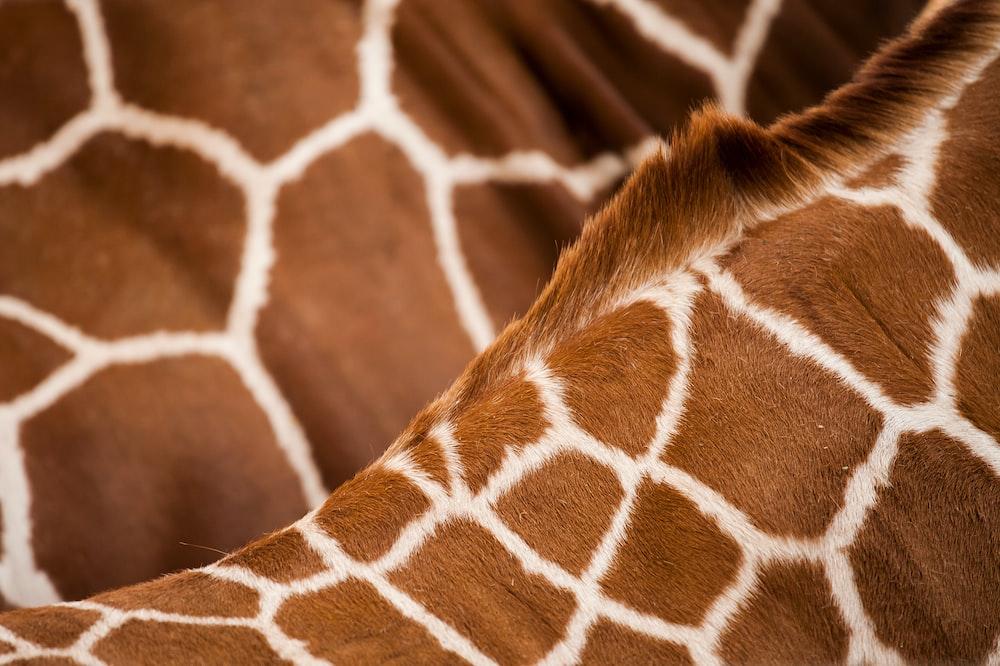 giraffe animal skin